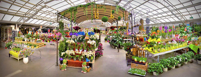 Jardinerie Jardinerie Fleurs Et Plantes D Auvergne